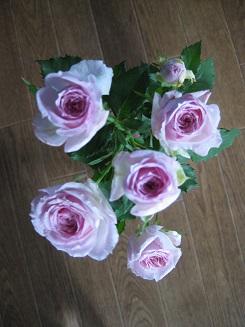 pinksprayrose20141014.jpg