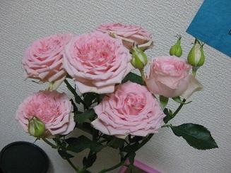 roseofthisweek20141001.jpg