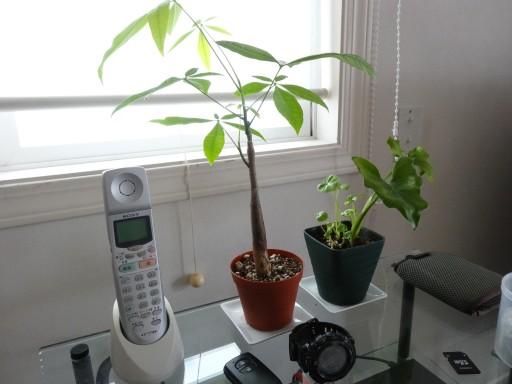 IKEA 慣用植物