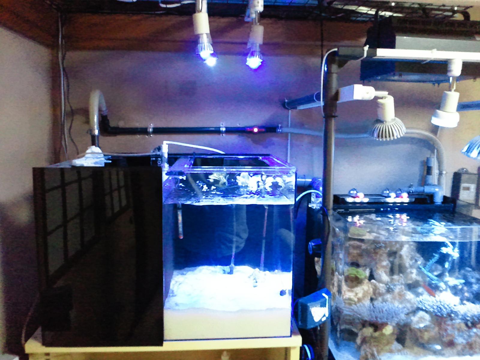 LPS水槽