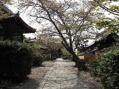 橘寺 (4月21日)