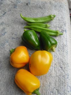 11-3収穫