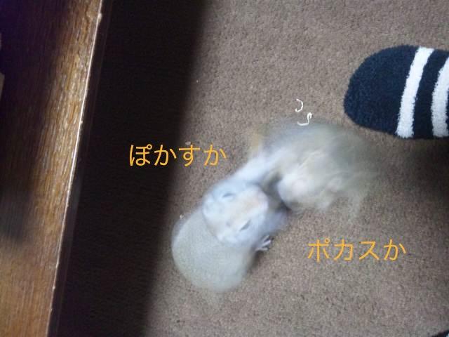 DSC_2947.jpg