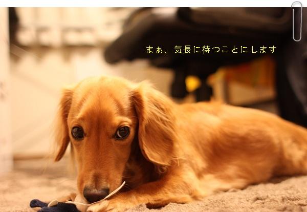 ぱぱナツオ6