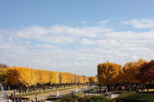 昭和記念公園2010-5