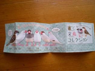 雀と文鳥コレクション