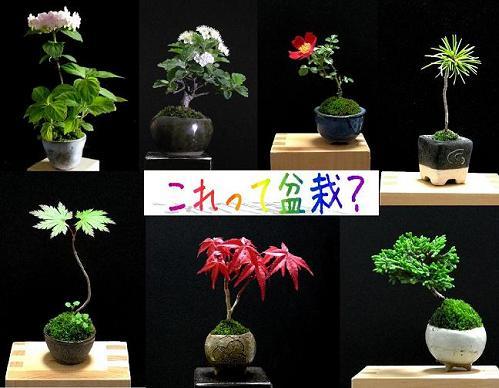これって盆栽?