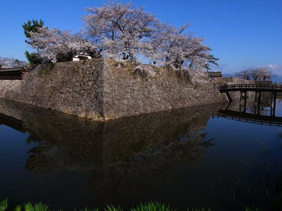 130413sakura1.jpg