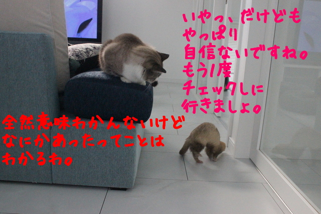L45SnInqDUVhtJx1419124427_1419124566.jpg