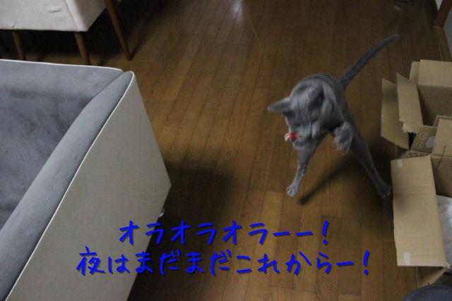 kako-6kKoGAX3N4rTJXqC.jpg