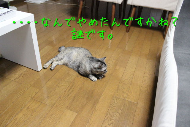 kako-TT3grYaM5peYNaix.jpg