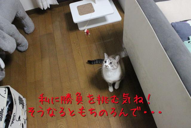 kako-b4WnmTu6SNrMOOh0.jpg