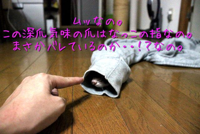 kako-kJho3tCu57E0czj4.jpg