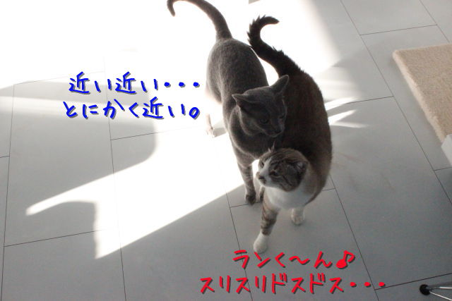 kako-n5u57CutqPbs5SyV.jpg