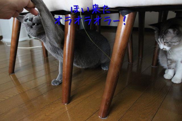 kako-njZzG668GaMPUzYc.jpg
