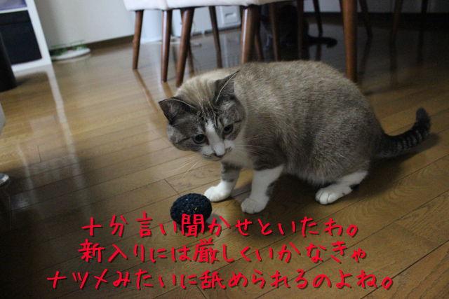 kako-xobj6MhQ69eRjhHo.jpg