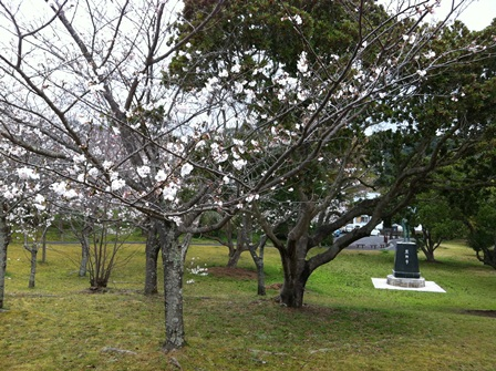 お花見熊野市20131