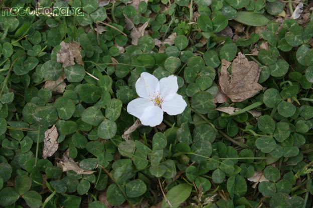 IMG_8292桜9