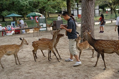 奈良 鹿 包囲