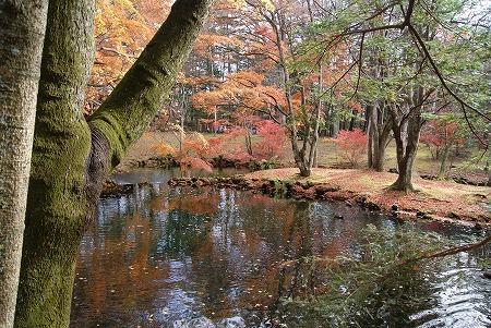 軽井沢 雲場池2