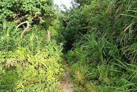 石垣島 ジャングル