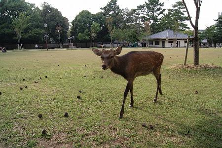 奈良 鹿公園