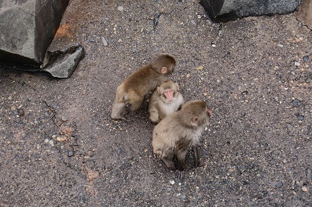 長野 動物園4