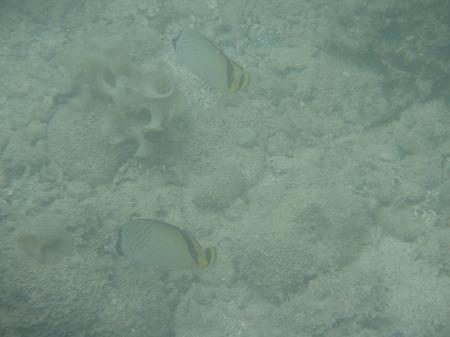 石垣島 お魚 2匹