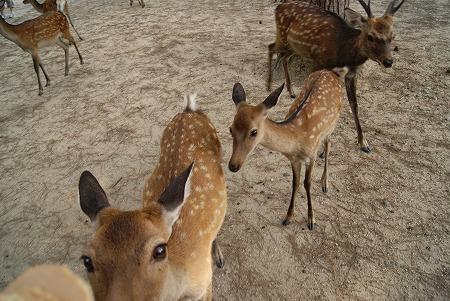 奈良 鹿 行列