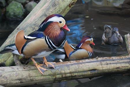 長野 動物園7