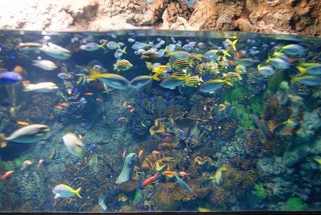 きれいなお魚たち