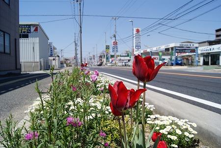 道端の花々