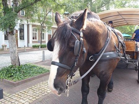 ハウステンボス 馬