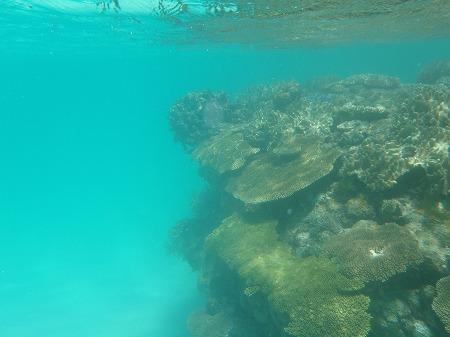 ニシ浜 珊瑚礁