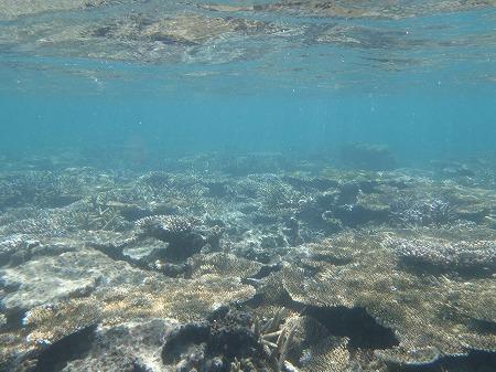 ニシ浜 海 クリアブルー