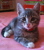 イタリアの猫の日々。イズミちゃんの日記へようこそ!