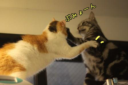ミケヲ20131018-03
