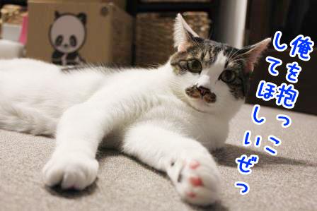 ひげごろう20131029