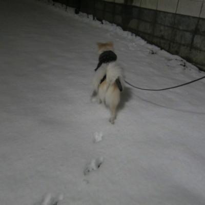 h25,1雪とアロー