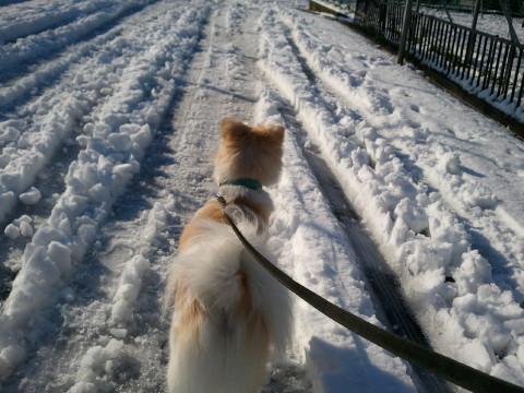 h25,1雪とアロー4