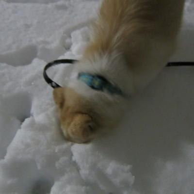 h25,1雪のにおいをかく