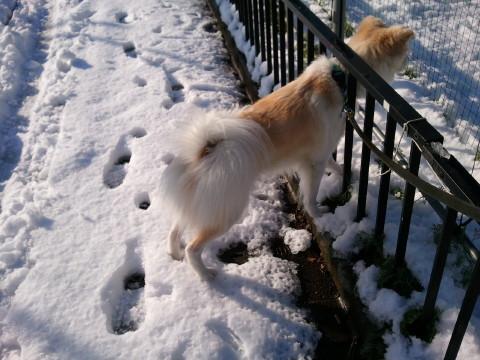 h25,1アローと雪散歩