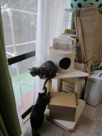 h25,2新猫タワー