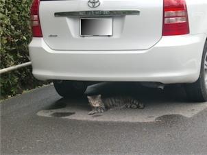 羽山神社・近くの猫