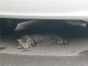 羽山神社・近くの猫02
