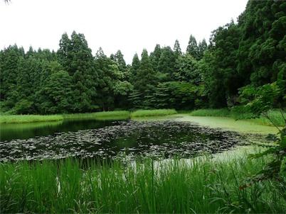 郡殿の池01