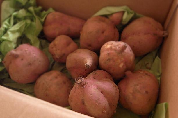 新もの安納芋 これで2キロ入