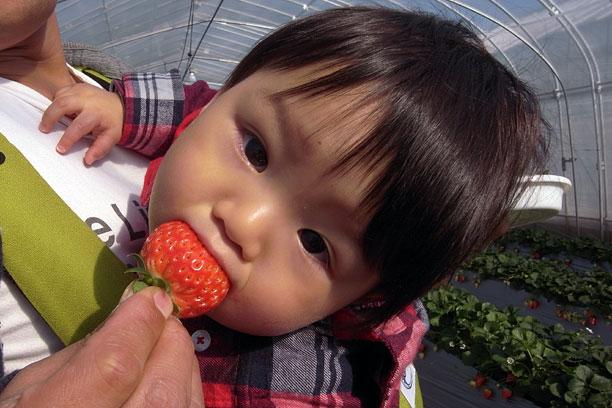 ウトウトしながら人生初のイチゴを食べる息子。