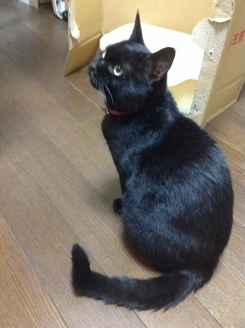 黒猫♂保護