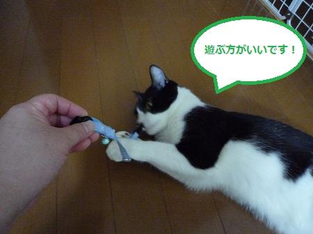 遊び道具1